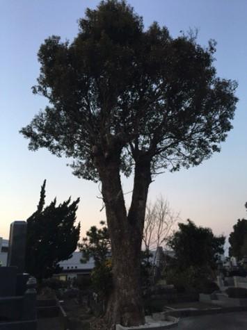 木の枝を落として・・・8年後