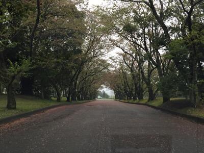 先日の台風並みの雨風