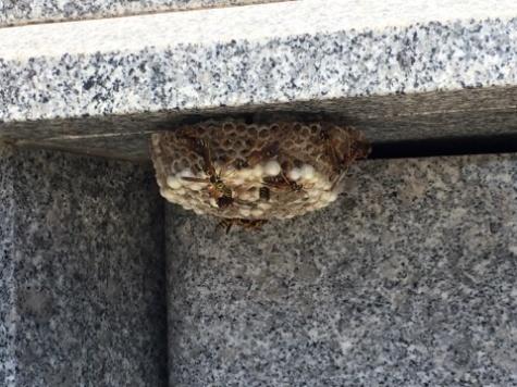 お墓に蜂の巣