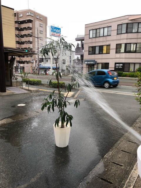 植木の水浴び