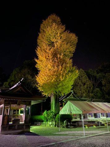 早朝の健軍神社。