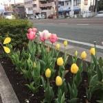 黄色が咲き出しました(^^)