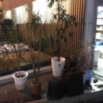 植木の日光浴準備(^^)