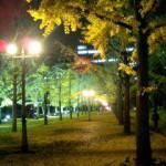 熊本市の木